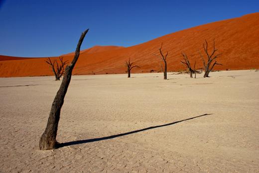 La llanura de Dead Vlei con las acacias petrificadas
