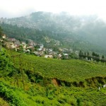 Los campos de té y al fondo Darjeeling