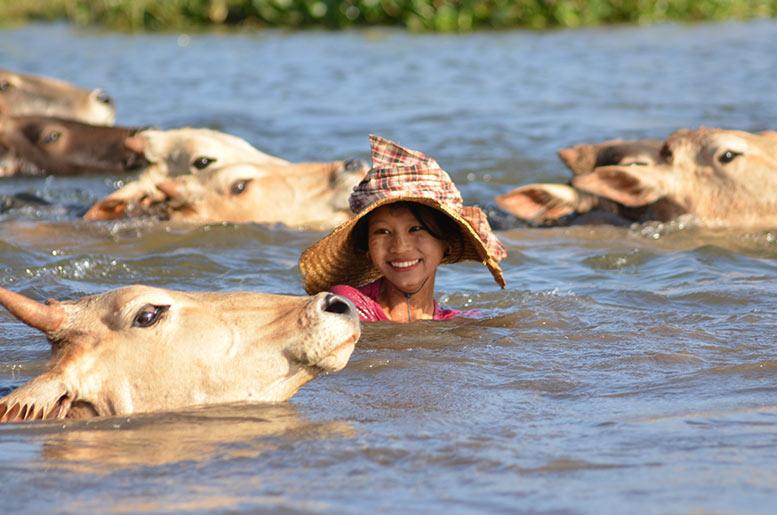 Mujer Tailandesa cruzando un río con sus vacas
