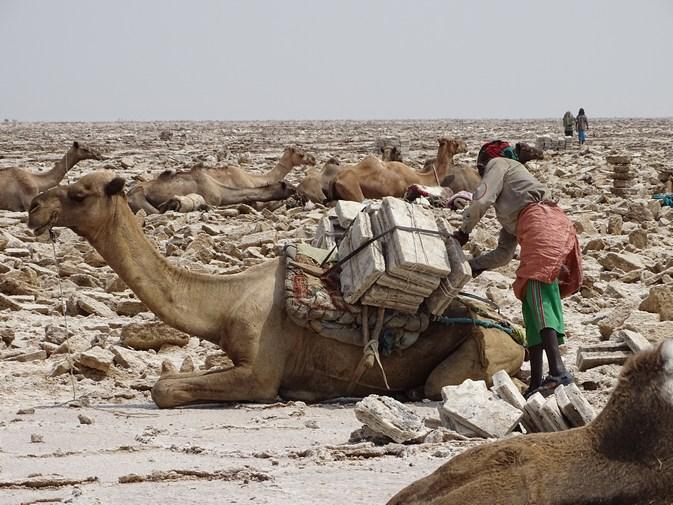 Cargando los camellos