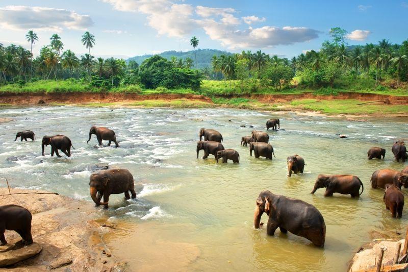 Foto de Ruta por Dos paraísos en uno elefantes bañandose