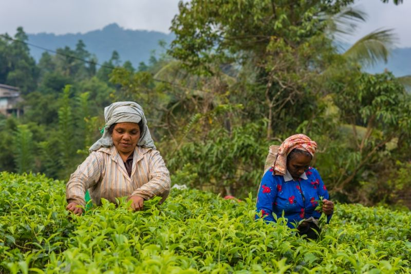 Foto de Ruta por Dos paraísos en uno tareas agricolas