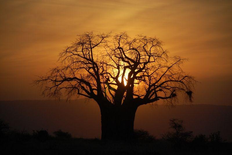 Foto de Ruta por El corazón de Africa Sol escondiendose entre arboles