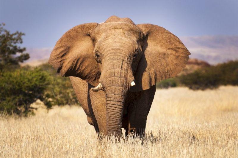Foto de Ruta por El lado salvaje de África elefante