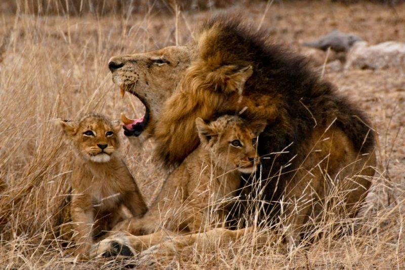 Foto de Ruta por El lado salvaje de África leones