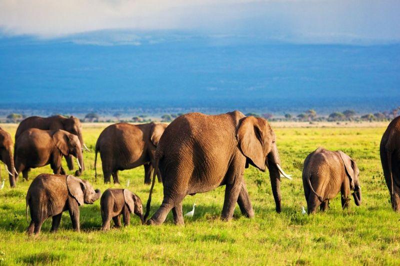 Foto de Ruta por El lado salvaje de África manada de elefantes