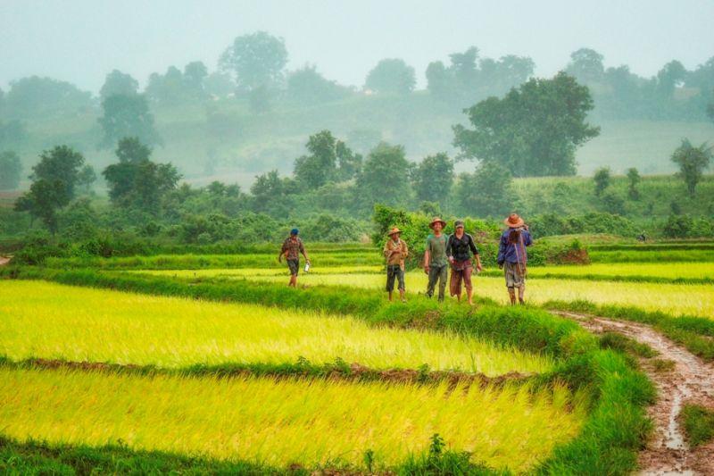 Foto de Ruta por El rincón oculto de Asia Campesinos entre arrozales