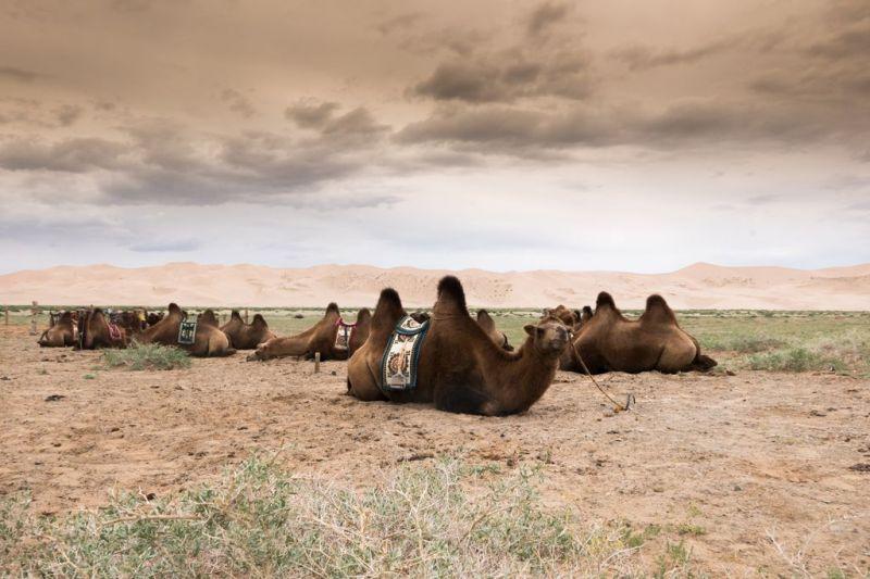Foto de Ruta por El Transiberiano, desde San Petersburgo hasta Pekín Camel