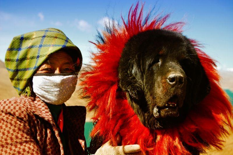 Foto de Ruta por En el corazón de los Himalayas mujer tibetana con perro