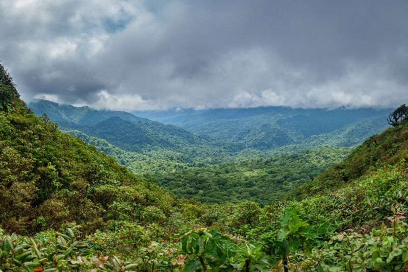 Foto de Ruta por Estallido Natural Paisaje del Monte Nuboso de Monteverde
