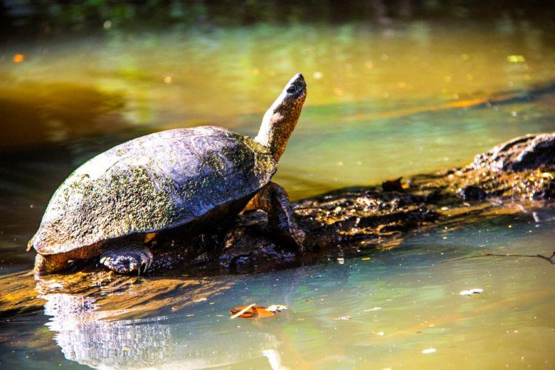 Foto de Ruta por Estallido Natural Tortuga en tortuguero