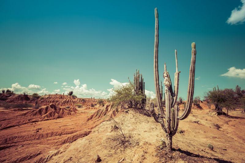 Foto de Ruta por La atracción de Sudamérica Desierto de la Tatacoa