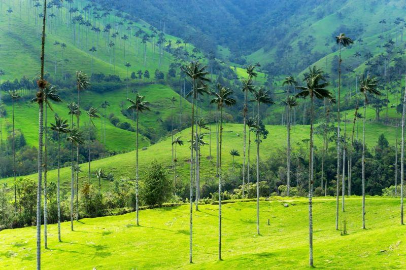 Foto de Ruta por La atracción de Sudamérica Paisaje del valle de Cocora