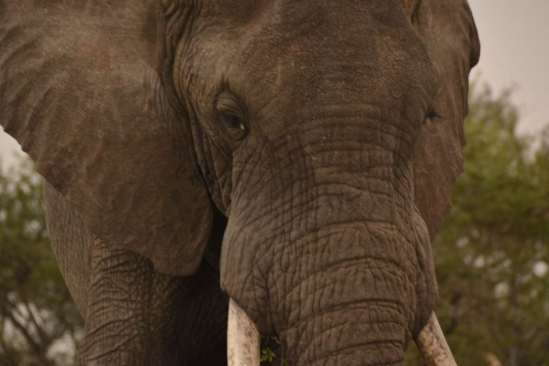 Foto de Ruta por Las perlas de Tanzania Elefante
