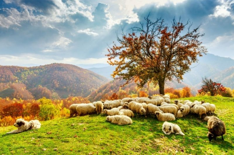 Foto de Ruta por Los dominios de Drácula Campo de ovejas