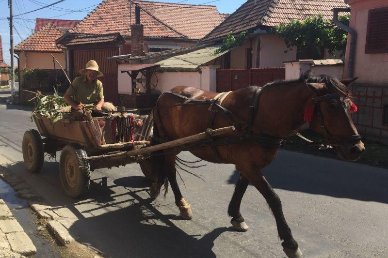 Foto de Ruta por Los dominios de Drácula paseo por transilvania