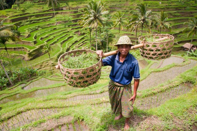 Foto de Ruta por Montañas, verdes arrozales y Yoga terrazas de arroz