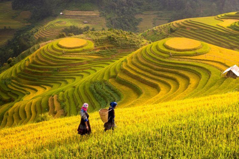 Foto de Ruta por Montañas, verdes arrozales y Yoga Terrazas de arroz en el norte de Vietnam
