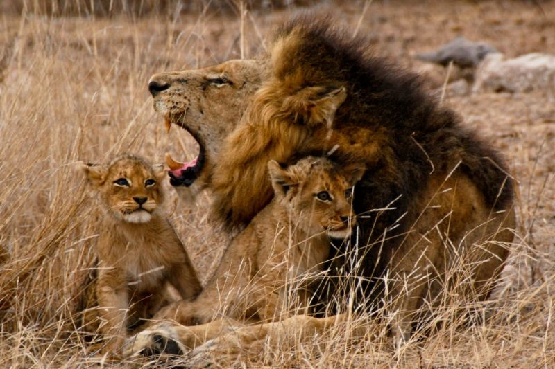 Foto de Ruta por Mozambique y Kruger 7