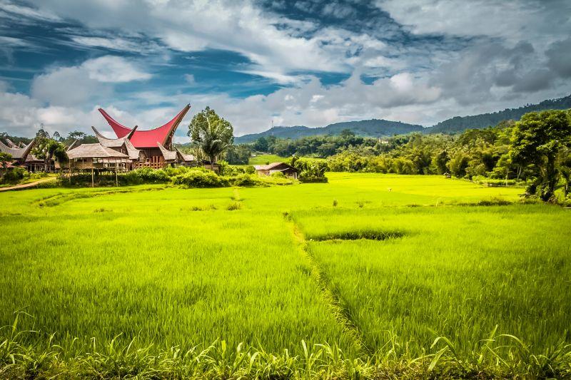 Foto de Ruta por Postales de Indonesia Campos de Sulawesi