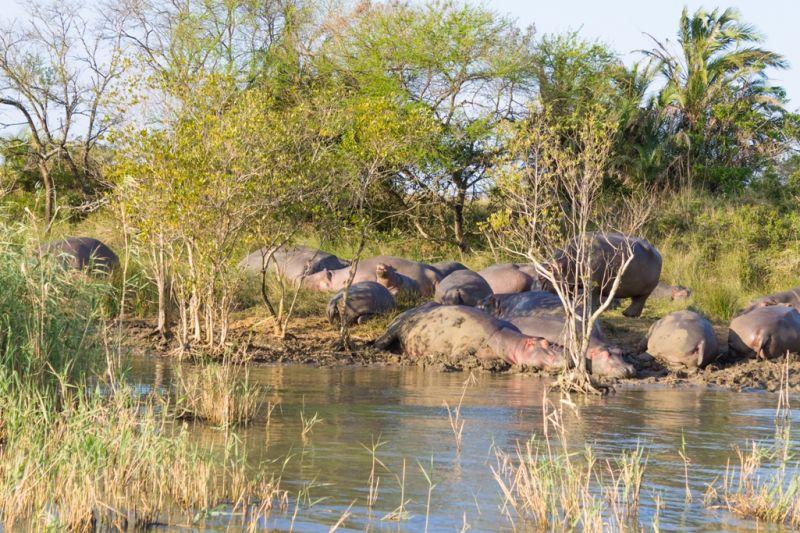 Foto de Ruta por Road trip por Sudáfrica paseando por la orilla del rio