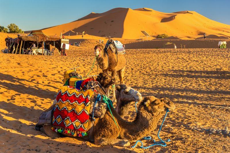 Foto de Ruta por Rumbo al desierto camello