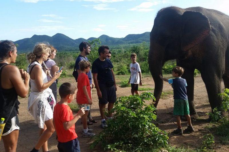 Foto de Ruta por Tailandia en Familia Aprendemos sobre los elefantes