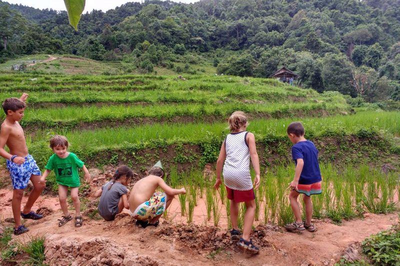 Foto de Ruta por Tailandia en Familia Plantaciones de arroz
