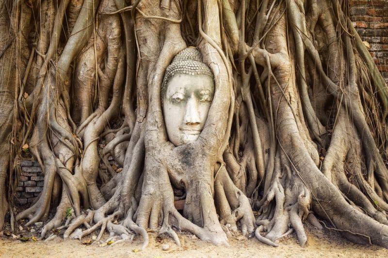 Foto de Ruta por Yoga en el antiguo Siam buda en el arbol