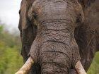 Viaje a Sudafrica - Elefante observándonos