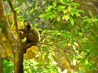 Viaje a Madagascar - Lémur en Ranomafana