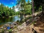 Viaje a Canada - Paisaje de los bosques canadienses
