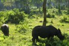 Viaje a Nepal - Rinoceronte en el parque de Chitwan