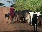 Viaje a Tanzania - Pastor Masai